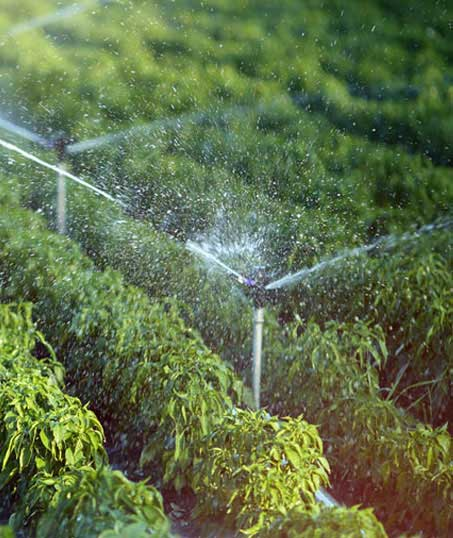 Valley Clean-up Services   Irrigation System Repair