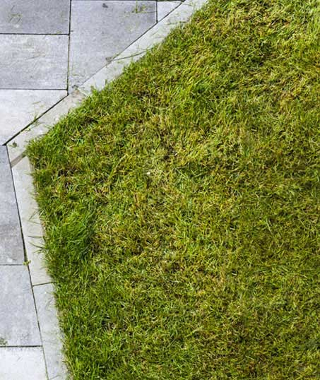Valley Clean-up Services   Lawn Dethatching