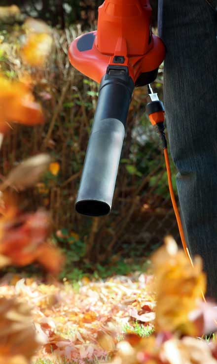 Valley Clean-up Services   Leaf Removal