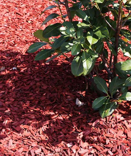 Valley Clean-up Services   Mulching