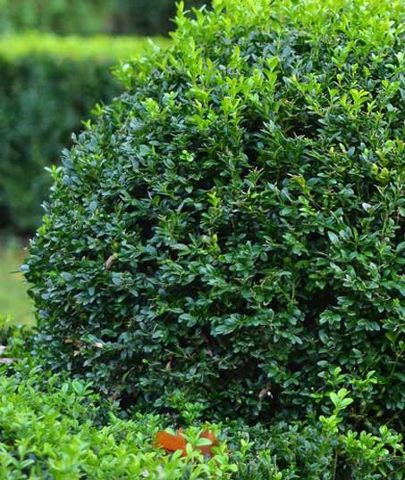 Valley Clean-up Services   Shrubs & Hedges