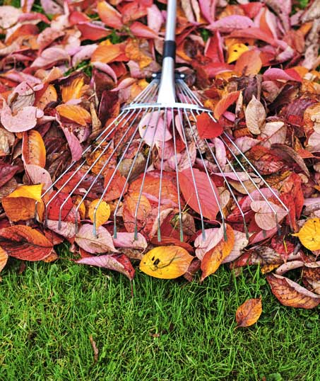 Valley Clean-up Services   Fall Clean Up